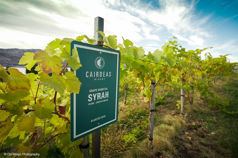 Cairdeas Winery estate vineyard, Joesph Phelps clone Syrah