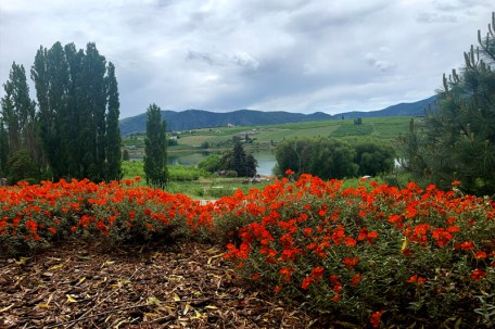 Tildeo Winery view of lake and flowers