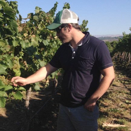Checking the grapes, Devsion Vintners