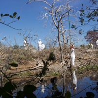 VIDEO: Destruction of San Antonio's Bird Island