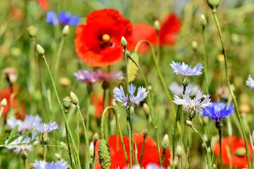 Crecimiento personal: 15 enseñanzas sacadas de la observación de mis plantas
