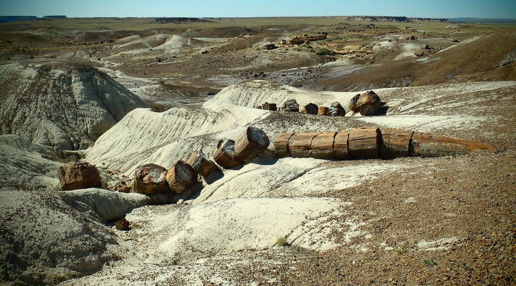 The petrified trees of the petrified forest date back to in Brisbane