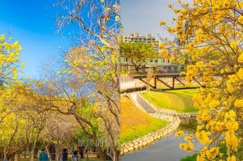 【台南景點】台南春天限定金色花海,帶你拍下最幸福時刻的模樣:竹溪河畔、億載公園