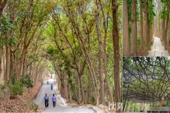 【台南景點】台南最接近龍貓的森林秘境步道!芬多精來這裡可以一次補足:川文山森林生態保育農場