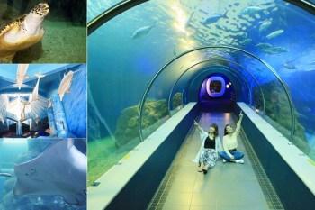 【澎湖水族館】澎湖免日曬超推室內景點!美拍海底隧道、最有活力的大洋池餵食秀超好看啦:澎湖水族館