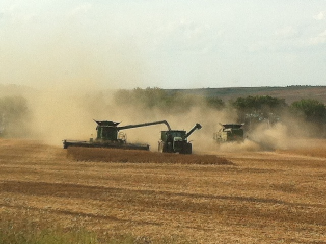 2 Reasons Wheat Farmers Don't Plant Saved Seed