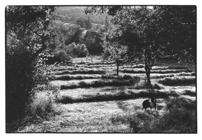Les foins, Aveyron, prise de vue argentique, JP Devals