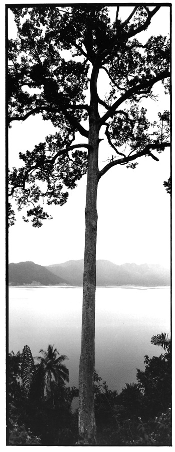 Grand arbre au bord du lac, Indonésie, photographies argentiques, Devals