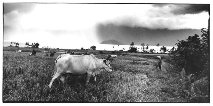 Dans les rizières, clichés noir et blanc argentique, Jean-Pierre Devals