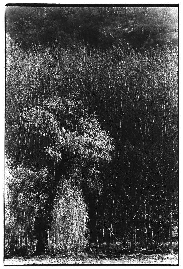 Saule pleureur, Aveyron, photo noir et blanc, Jean-Pierre Devals