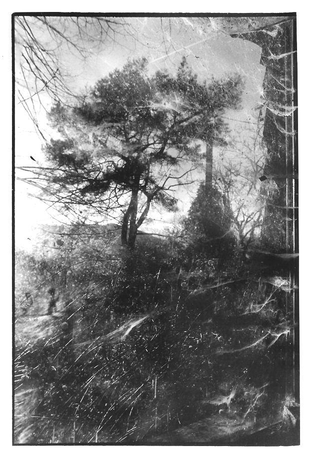 Le pin, Aveyron, clichés photographiques argentiques, noir et blanc, Jean-Pierre Devals