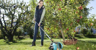 Idealne zbieranie owoców z drzew