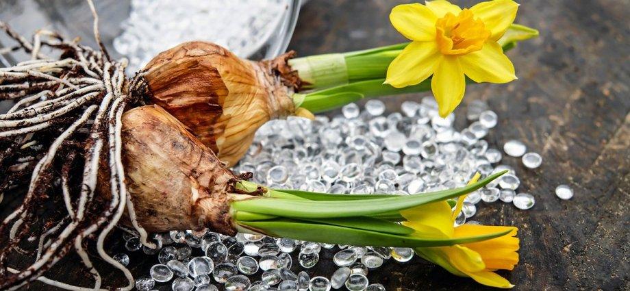 Kwiaty cebulowe idealne do każdego ogrodu