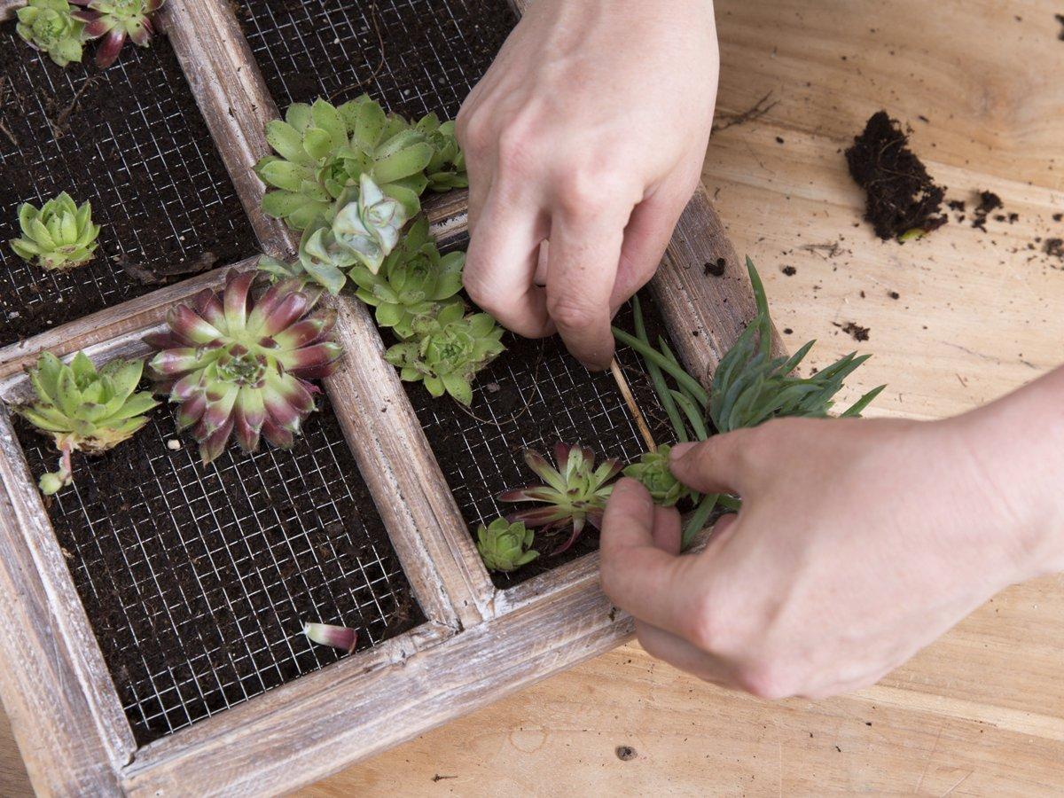 Teraz możesz od góry wypełnić okno ziemią do kwiatów