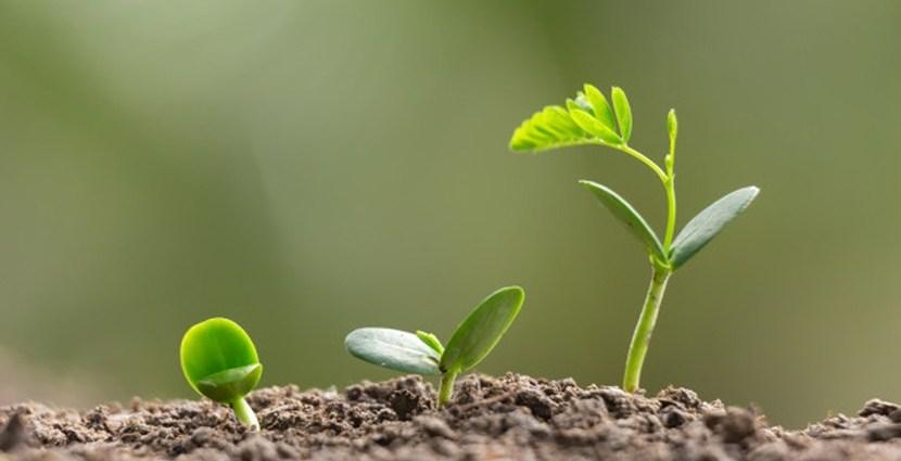 Dlaczego warto nawozić glebę w ogrodzie i jak możemy podzielić nawozy?
