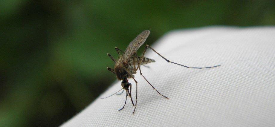 Komary w ogrodzie? Jak się ich pozbyć?