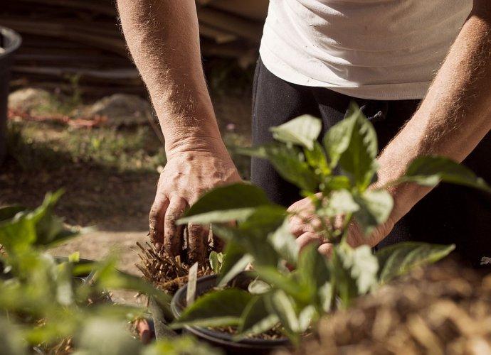 Lato w ogrodzie - jakie prace należy wykonać w sierpniu?