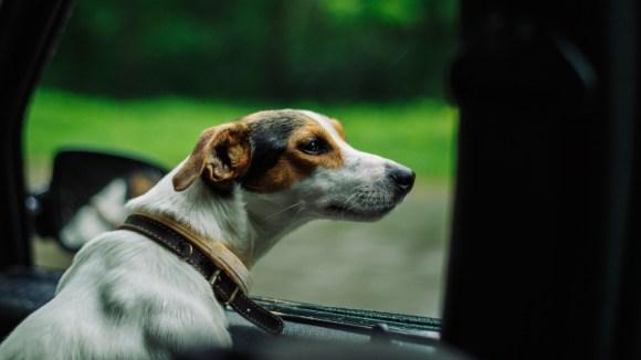 Cómo llevar el perro en el coche