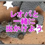 世界一人気のある爬虫類のペット手乗りレオパに耳付けレオパ現るヒョウモントカゲモドキとお散歩する