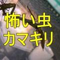 怖い虫カマキリ