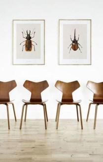 Escarabajos_6