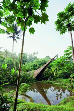 Green School, del arquitecto Effan Adhiwira, en Badung, Bali (Indonesia). El arquitecto está especializado en construcciones de bambú que siguen la tradición de la isla. La ventilación natural se completa en la escuela con ventiladores colgados en el techo. La primera construcción del complejo, que se convirtió en icónica, fue el puente Kul-Kul. IWAN BAAN