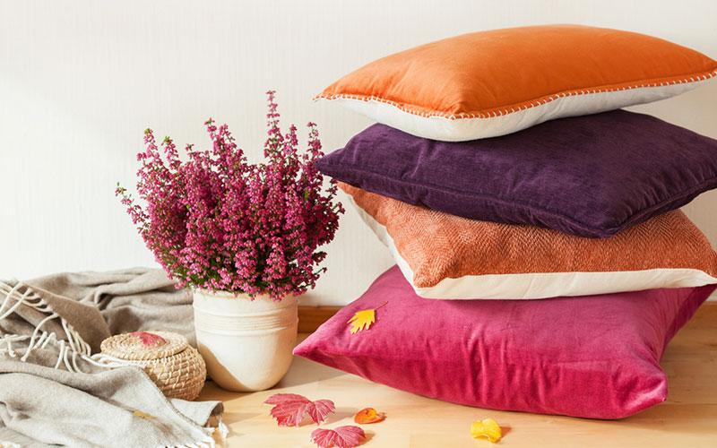 violet orange rose