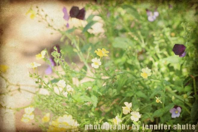 littleblooms