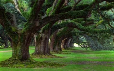 The photo is taken from ... http://www.sompaisoscatalans.cat/slist/bodhi-tree-wallpaper/