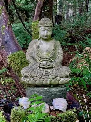 mossy meditator