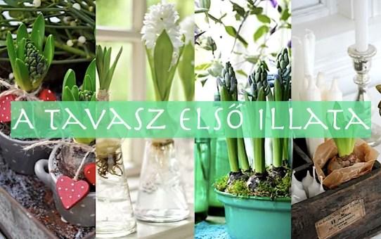 55 jácint - a tavasz első illata