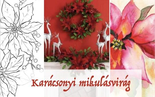 Karácsonyi mikulásvirág