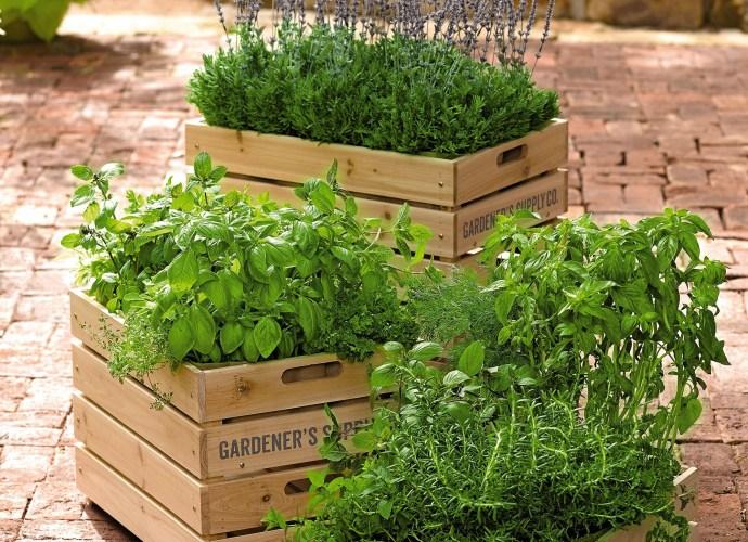 растения в ящике