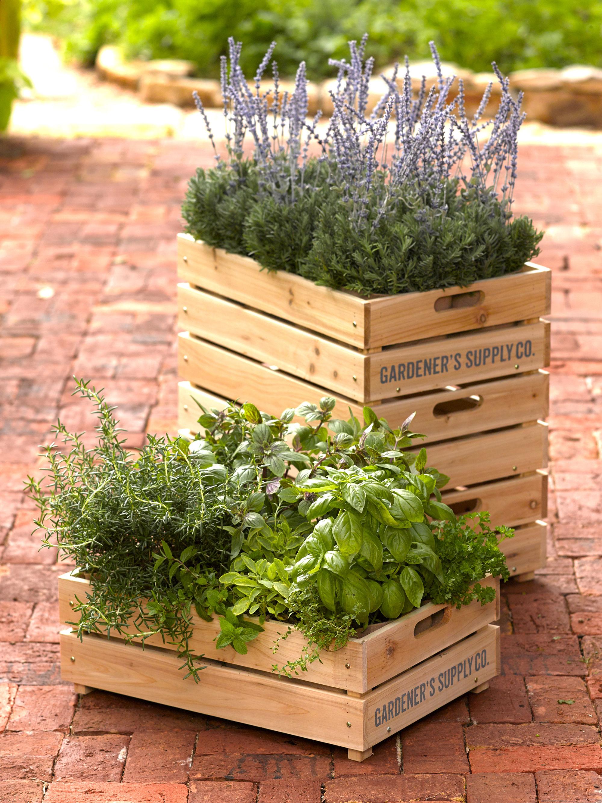 растения в ящиках
