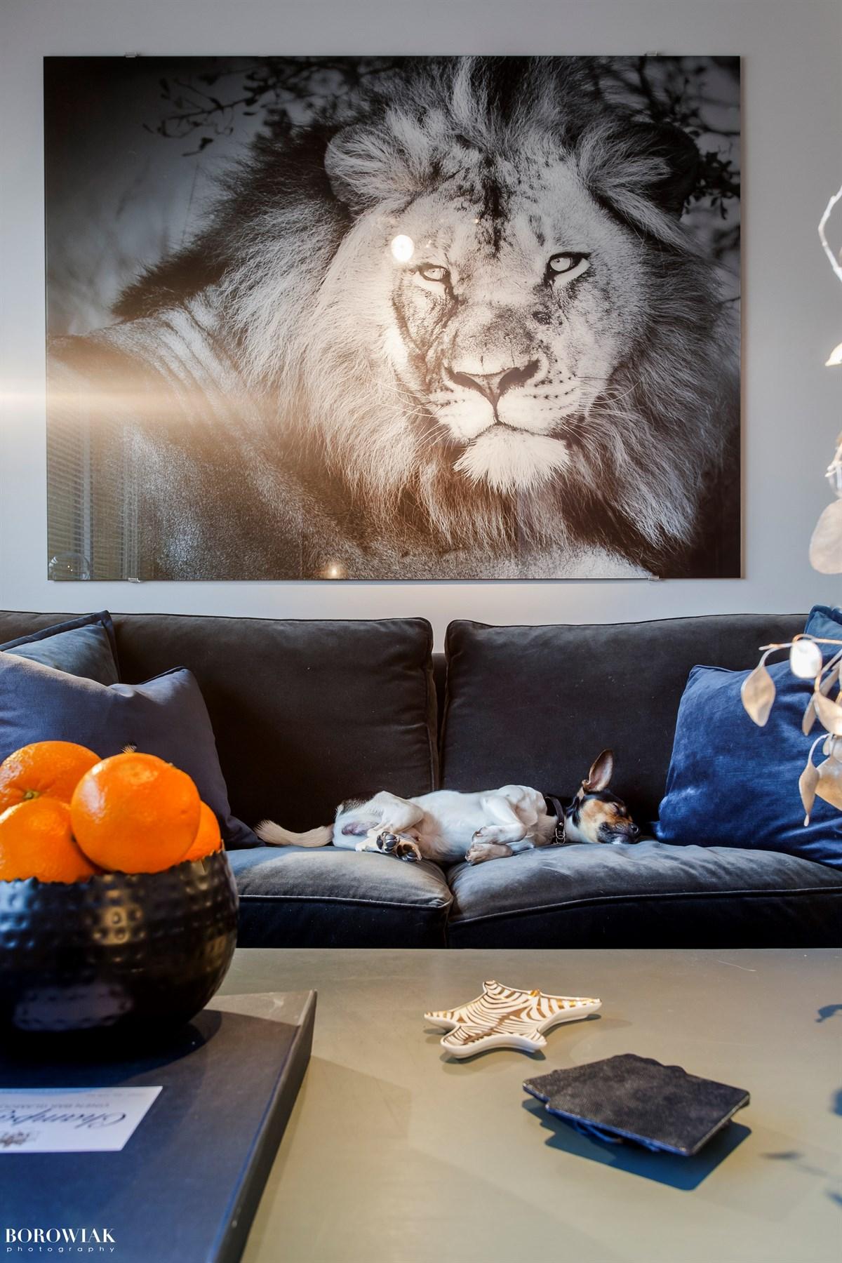 диван картина собака