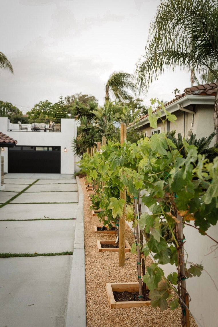 mini-vineyard
