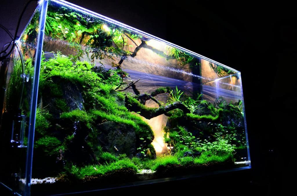 aquascape design with 10 gallon tank