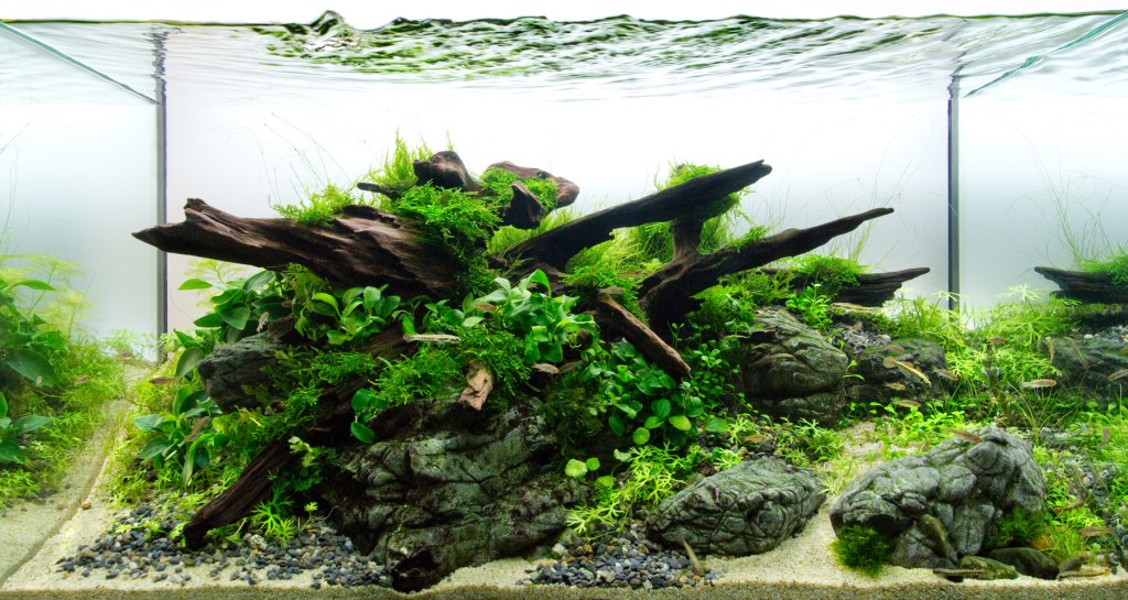 aquascape design with nature rock and wood