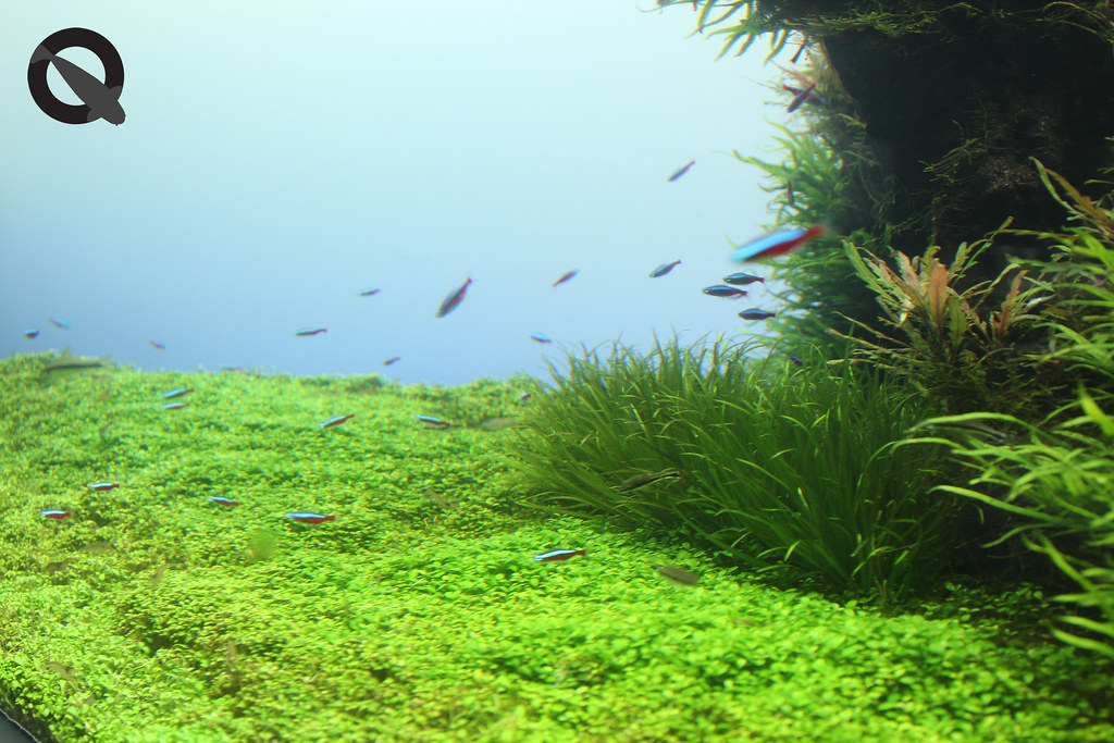 aquascaping for beginners india