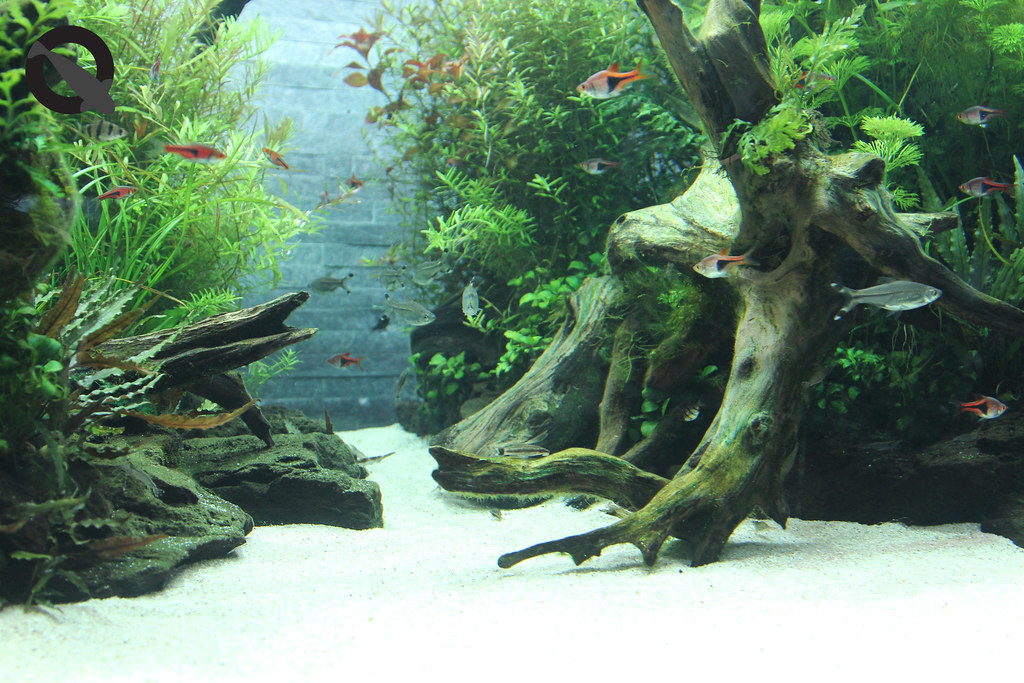 aquascaping for beginners