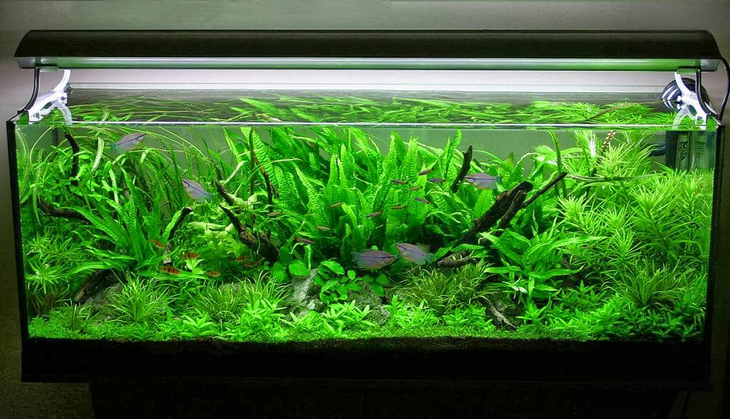 aquascaping ideas for beginners