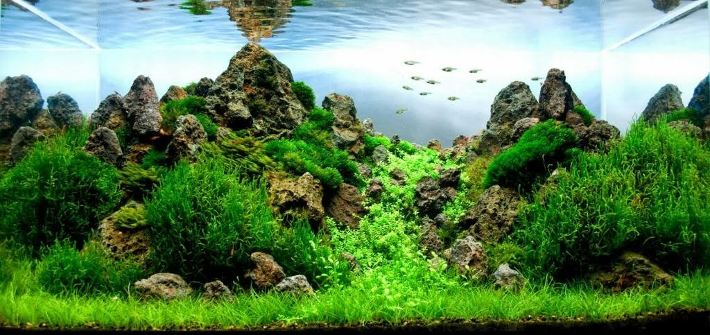 aquascaping plants for beginners
