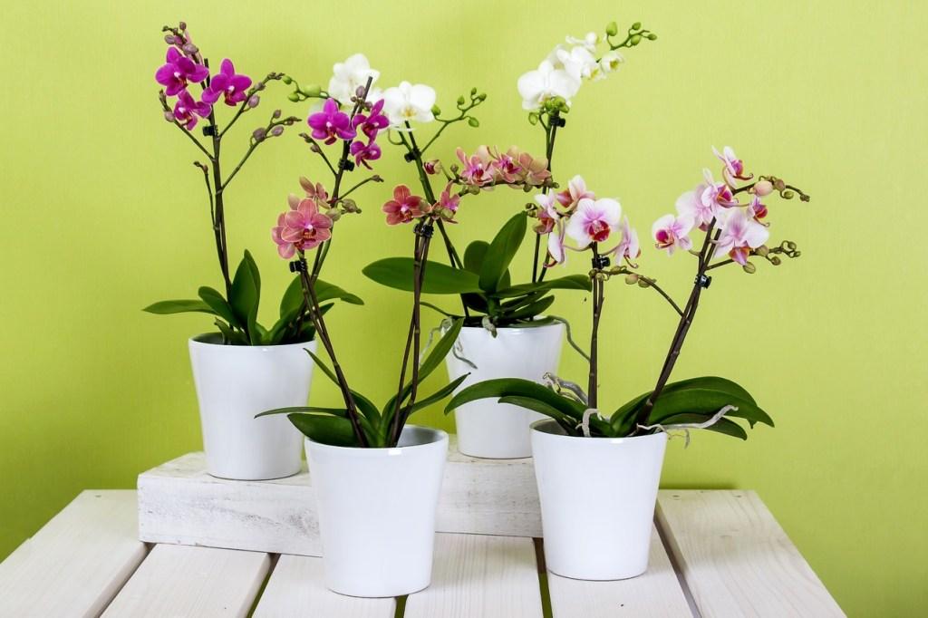 gardening plants with anggrek flora beautiful flower