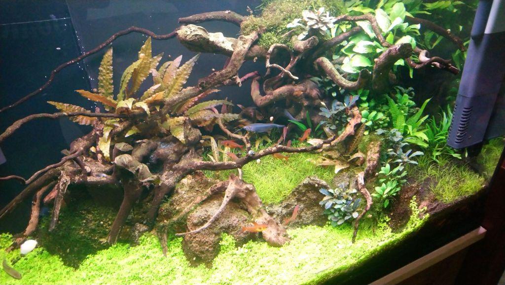 hardscape aquarium rocks