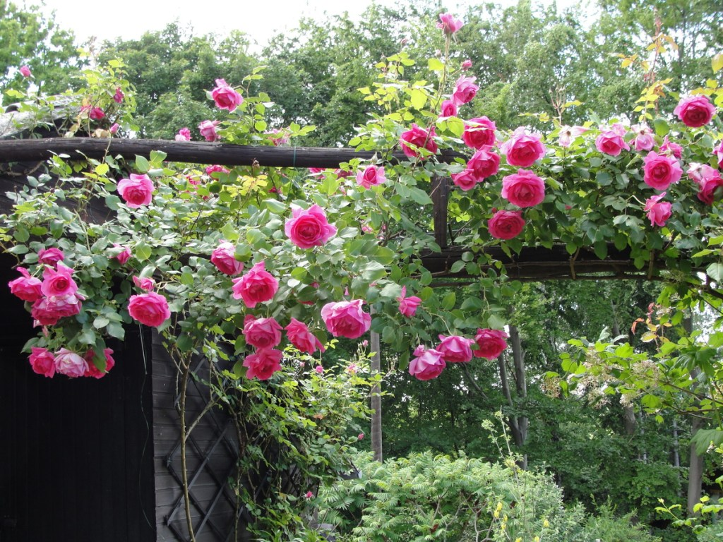 mini garden fence ideas with roses