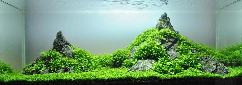 rocks for aquarium hardscape