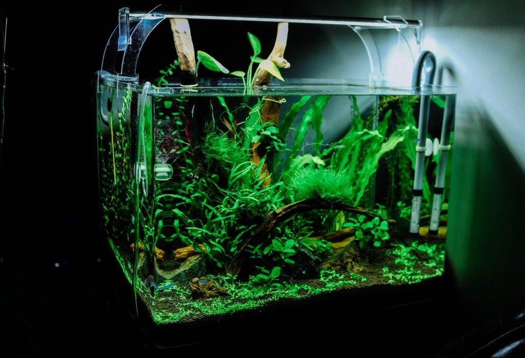 simple aquascaping for beginners