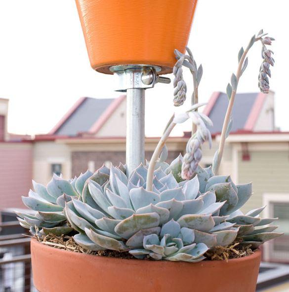 Colocar plantas en balcones.
