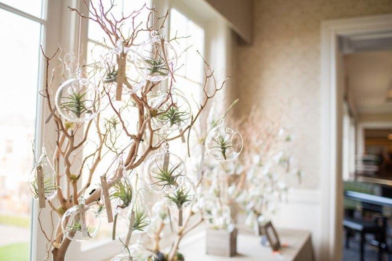 Plantas de aire para decorar interiores