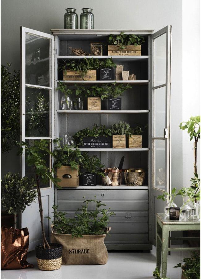 Plantas en el armario